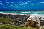 Galapagos Islands & South America