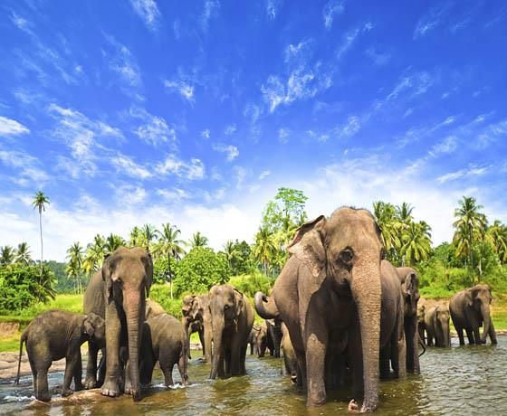 Sri Lankan Elephant Experience & Far East Cruise