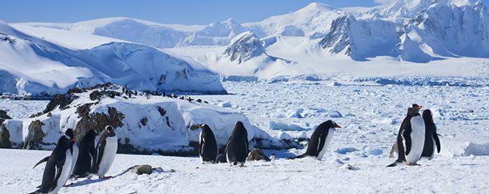 Antarctica Cruises Jetline Cruise