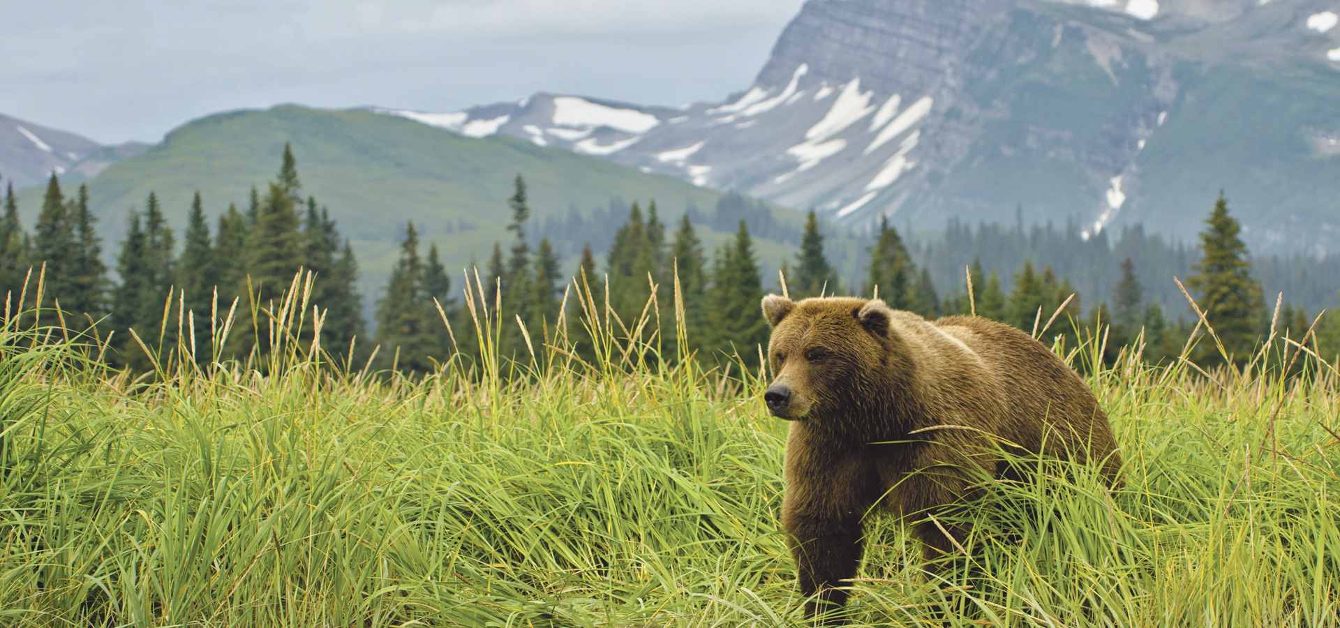 Alaska and Grizzly Bears: A Winning Combination with Celebrity Cruises